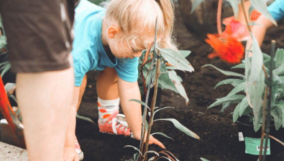 Young girl helping to plant flowers