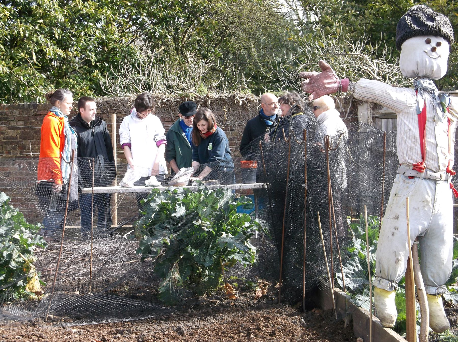 Group of volunteers in an allotment