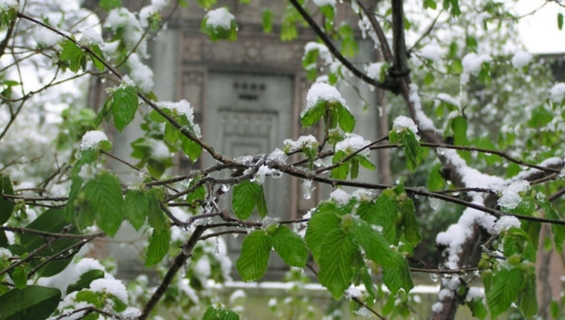 A mausoleum visible through snow covered tree branches
